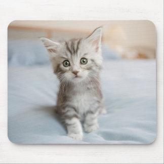 Maine Coon Kitten Mouse Pad