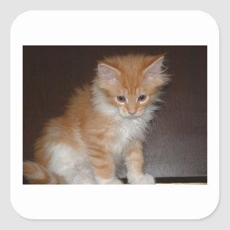 maine coon kitten.png square sticker