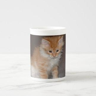 maine coon kitten.png tea cup