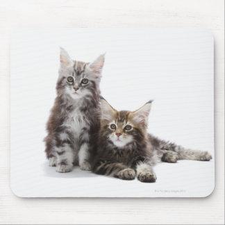 Maine Coon Kittens Mouse Pad