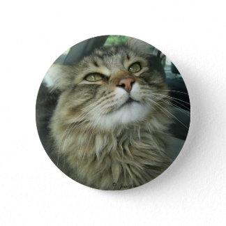Maine Coon kitty Button