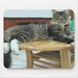 maine coon laying 2 mouse pad