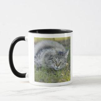 Maine Coon laying in grass, Central Florida. Mug