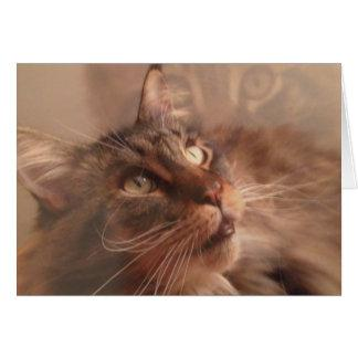 Maine Coon Note Card
