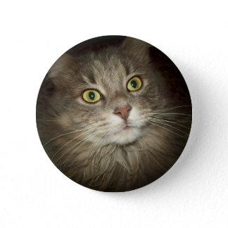 Maine Coon Pinback Button