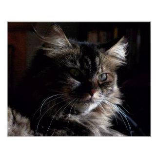 Mysterious Maine Coon, Poster Print Wall Decor