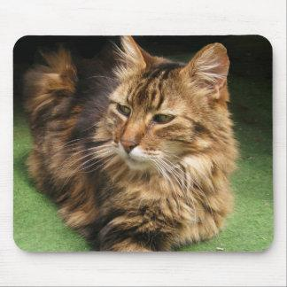 Norwegian Forest Cat Mouse Pad