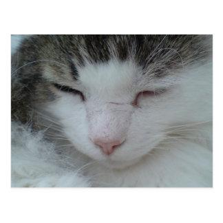 Postcard - Maine Coon Cat Image 2