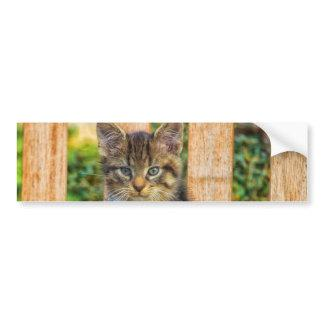 Pot Of Baby Kitten Bumper Sticker