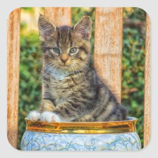 Pot Of Baby Kitten Square Sticker