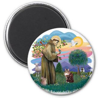 St Francis (ff) - Maine Coon cat  (brown tabby) Magnet