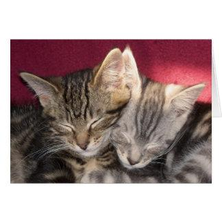 Two Cute Sleeping Maine Coon Tabby Kittens, Cats Card