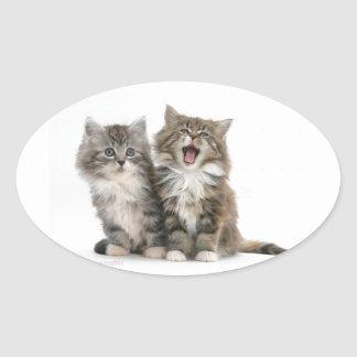 Yawning Maine Coon Kittens Oval Sticker